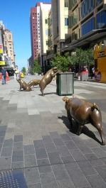 Rundle Mall pigs sniffing out a bargin