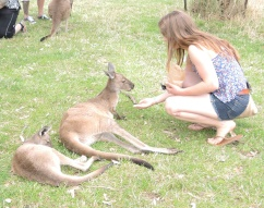Jynel and I meeting Kanga & Roo at Cleland Wifldlife Park