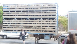A trailer load of sheep headed from KI, just for you mom as you don't have any of these to see at home :)