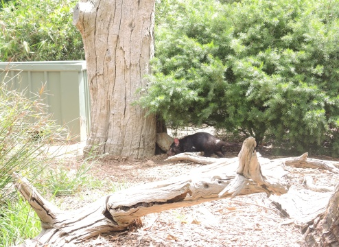Tasmanian Devil, he ran in a circle FOREVER